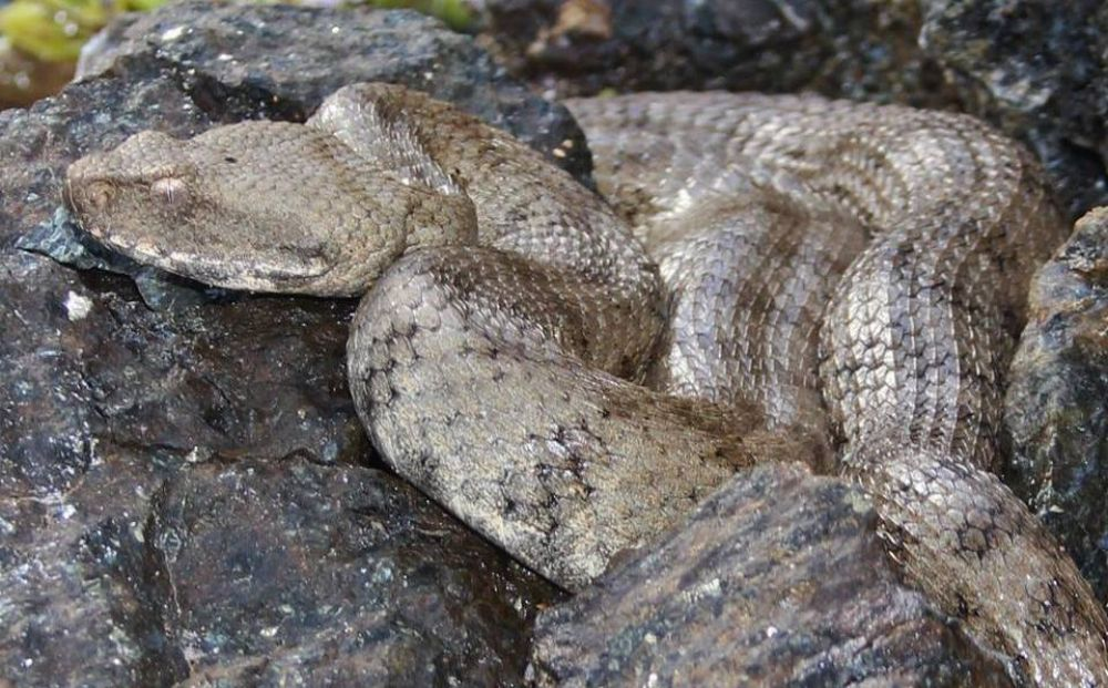 Где посмотреть на кипрских рептилий - Вестник Кипра