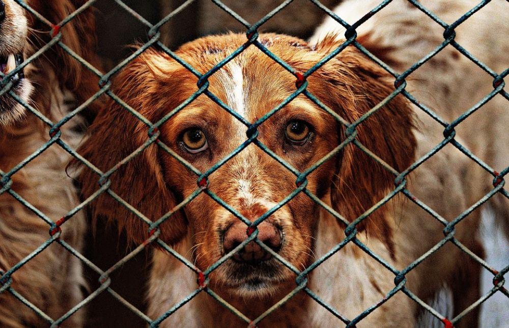 100 000 евро — приютам для животных - Вестник Кипра