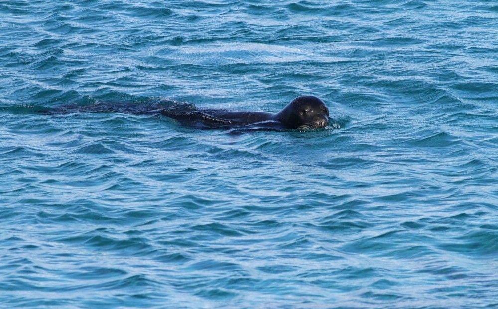 Недалеко от Керинии нашли тюленью пещеру - Вестник Кипра