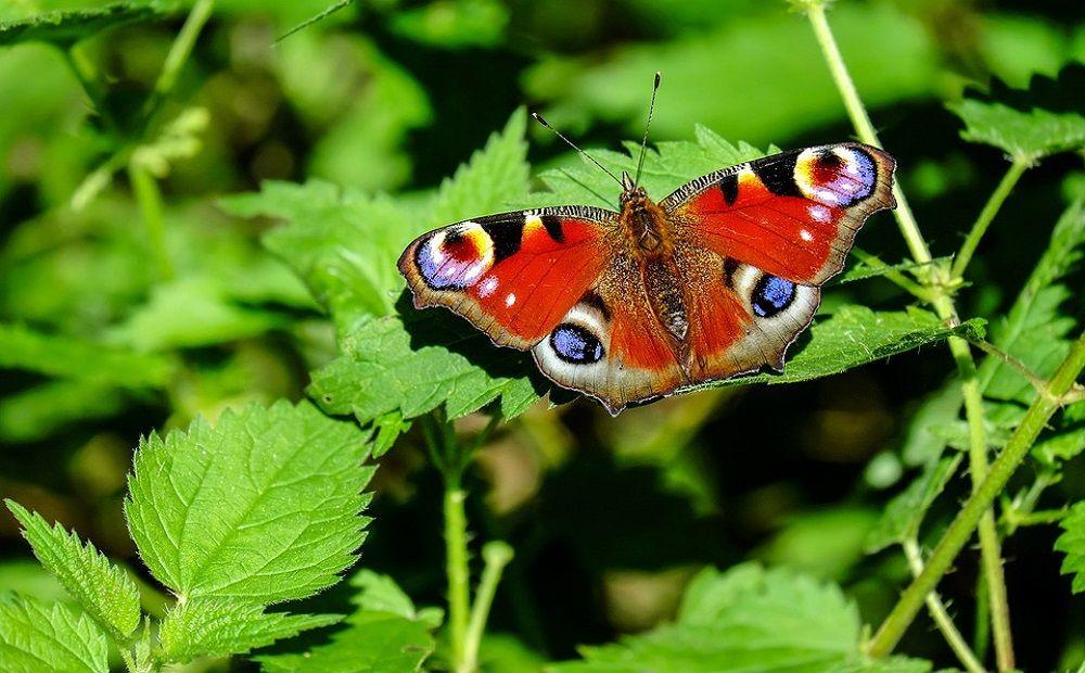 Голубянка, краеглазка и зорька: необычные бабочки Кипра - Вестник Кипра