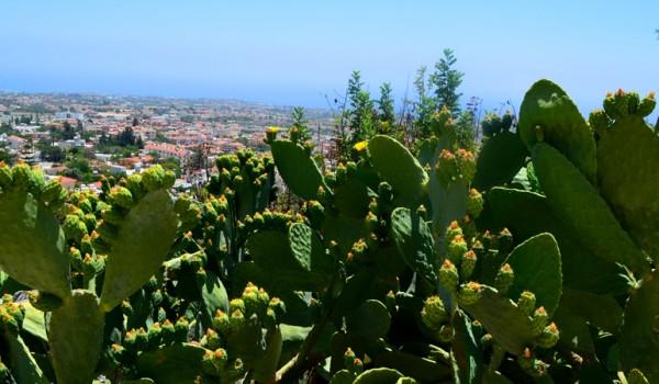 Выставка кактусов в Никосии