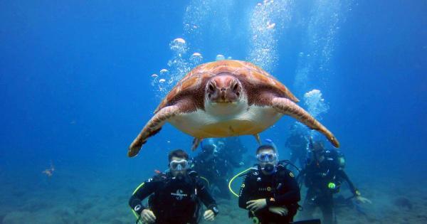 Кипрские дайверы помогут черепахам в Лачи