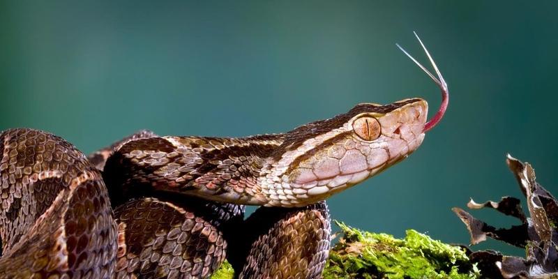 На Кипре годовалую девочку покусала ядовитая змея