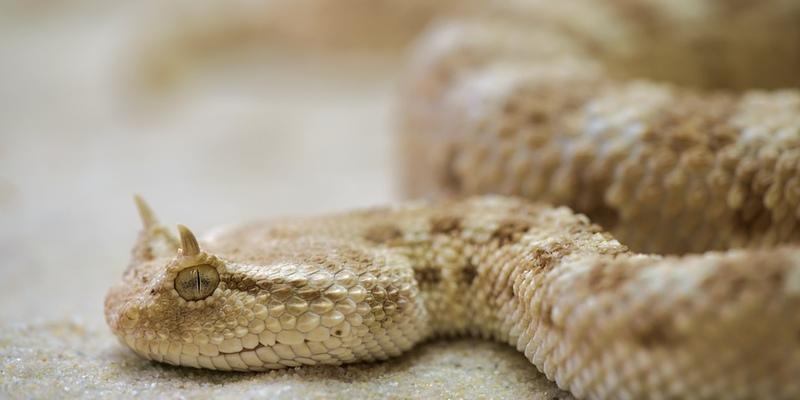 На Кипре в деревенскую школу заползла змея