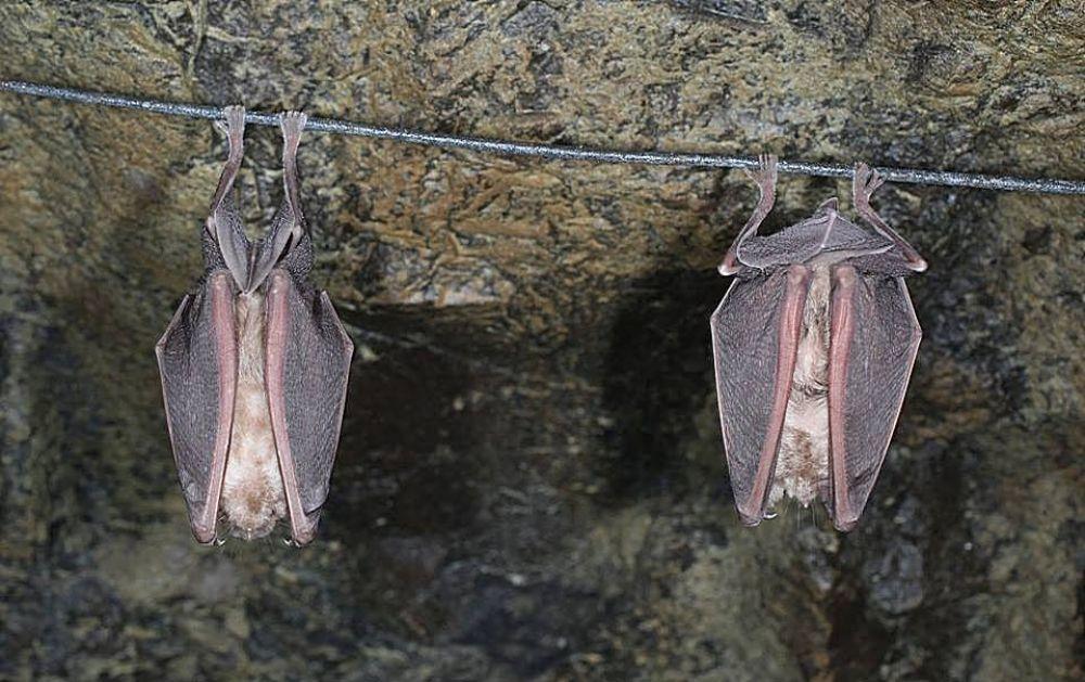 Вестник Кипра - Летучие мыши ждут холодов