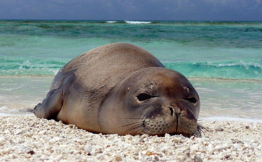 Правительство Кипра защитит тюленей - Вестник Кипра