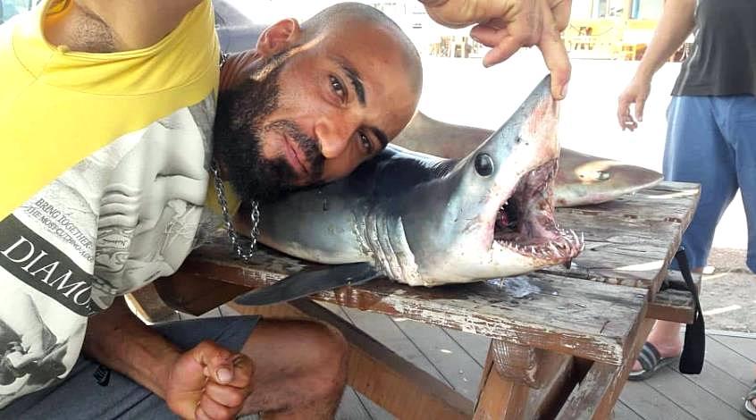 В районе Фамагусты выловили двух акул - Вестник Кипра