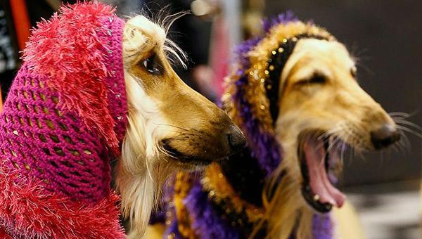 В мае на Кипре пройдет выставка собак
