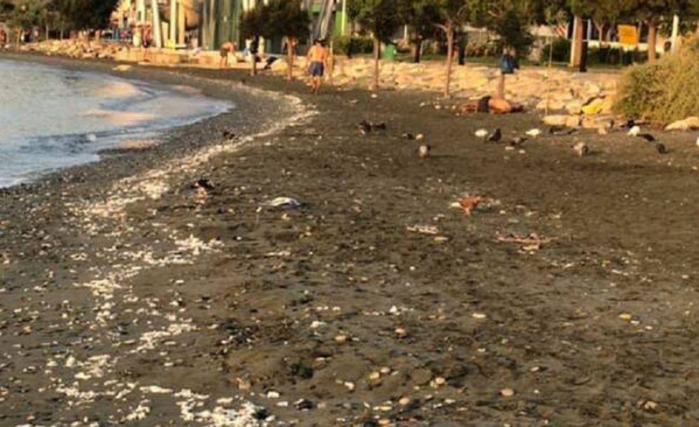 На пляж Лимассола волна вынесла туалетную бумагу - Вестник Кипра