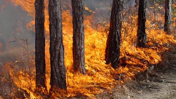 Пожар в районе Лимассола локализован – обошлось без жертв и серьезных повреждений