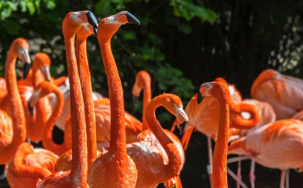 11 000 фламинго — новый рекорд Акротири - Вестник Кипра