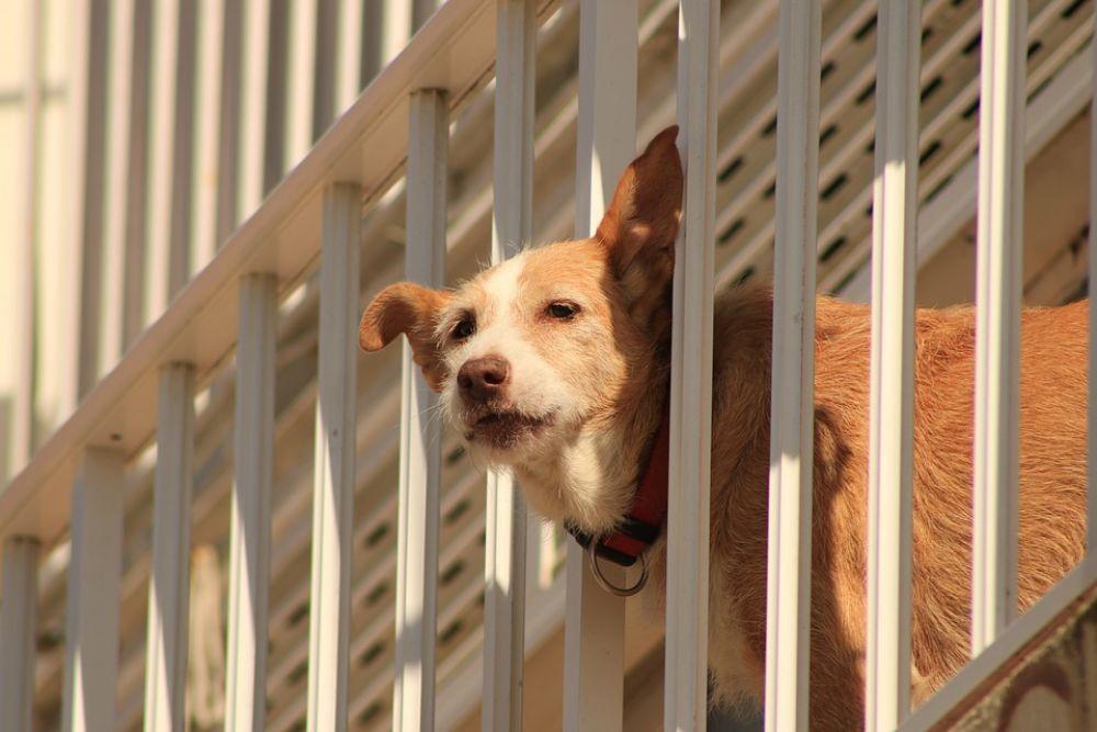 Жестокость к животным приведет за решетку - Вестник Кипра