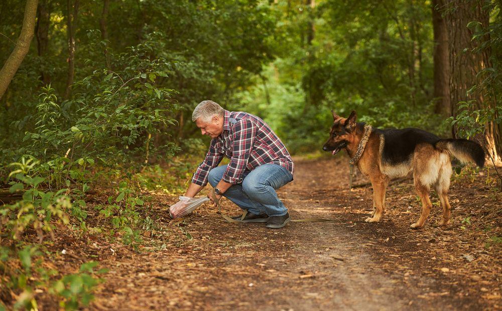 Убрать за собакой — с пакетом-перчаткой - Вестник Кипра