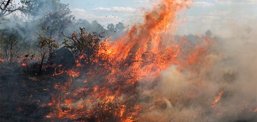 На Кипре начались лесные пожары | CypLIVE