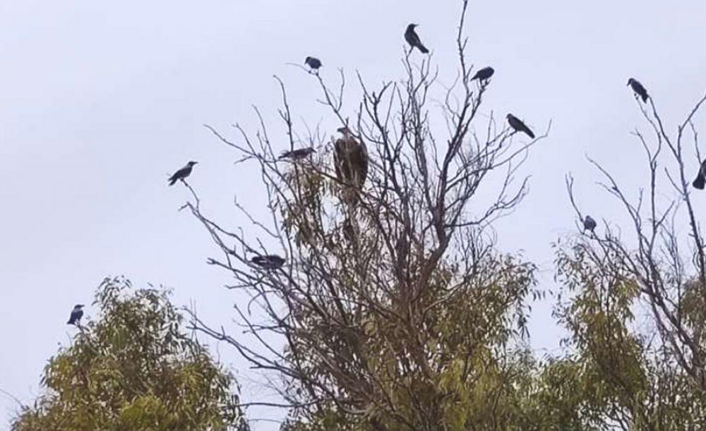 В Лимассольском парке нашли грифа - Вестник Кипра
