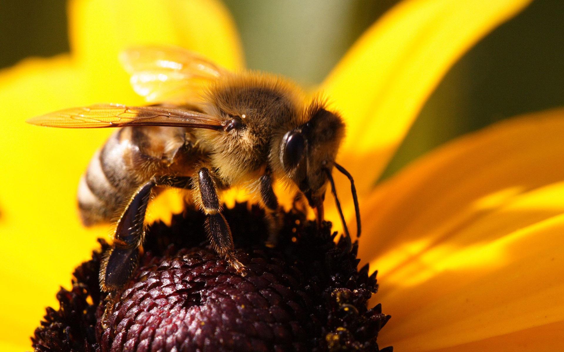 Пчелы на Кипре исчезают с угрожающей скоростью
