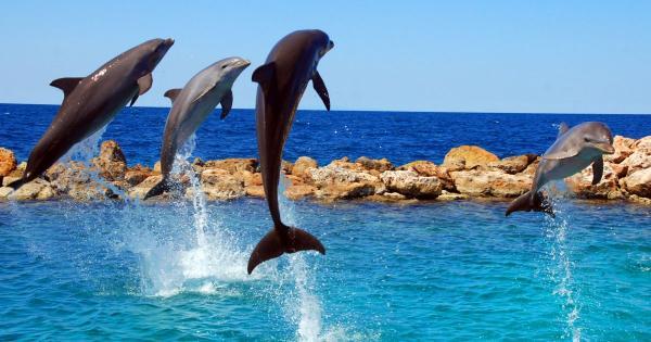 Дельфины и киты у берегов Кипра (видео)