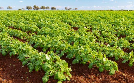 Кипр и Общая сельскохозяйственная политика ЕС - Вестник Кипра