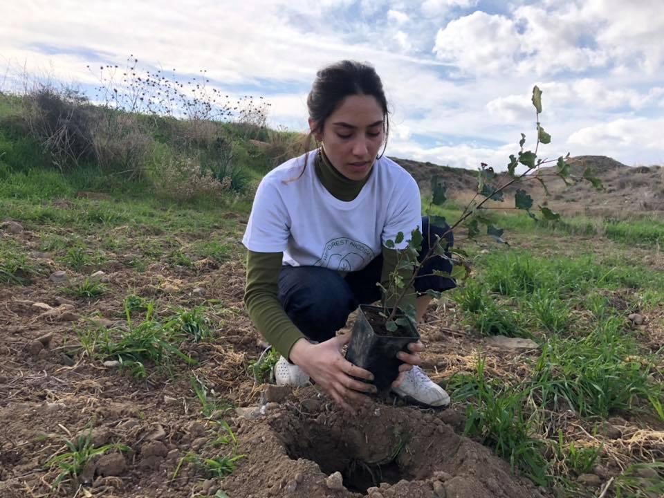 Более 3000 новых деревьев для Кипра - Вестник Кипра