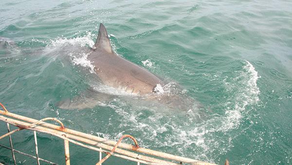 Охотник на акул (2001) смотреть онлайн бесплатно | 340x600