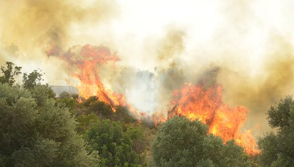 Пожарная служба Кипра устранила три возгорания в районе Лимассола