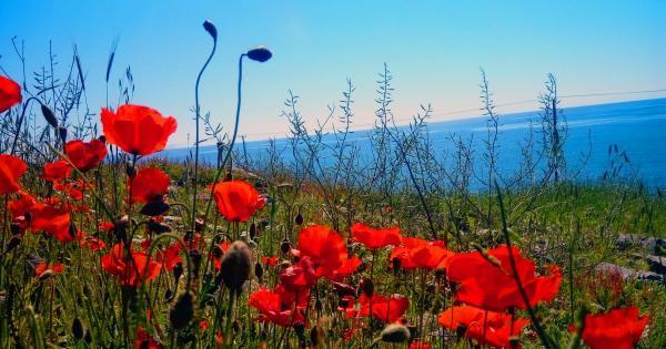Весна-Красна! Погода на Кипре на предстоящих выходных