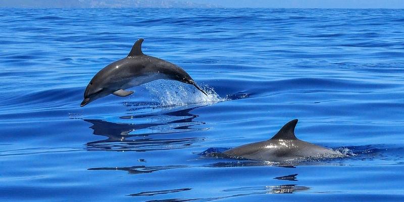 Море выбросило на берег в Лимассоле мертвого дельфиненка
