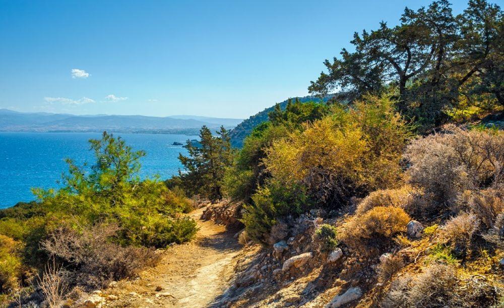 Трагедия на Акамасе - Вестник Кипра