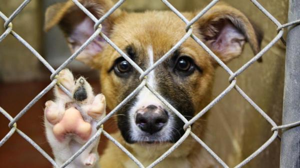 Животные не могут находиться в таких условиях. Партия по защите животных требует немедленно закрыть собачий приют в Ларнаке