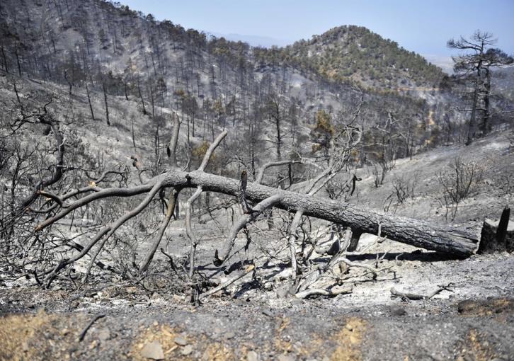 Охотники помогут возродить леса - Вестник Кипра