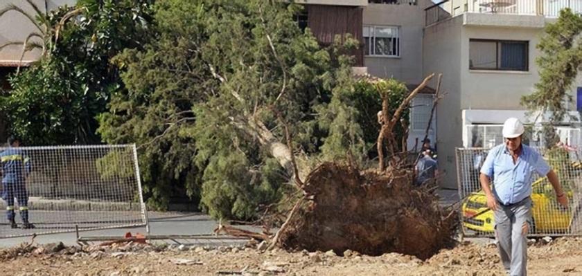 Сильный ветер повалил дерево в столице Кипра | CypLIVE