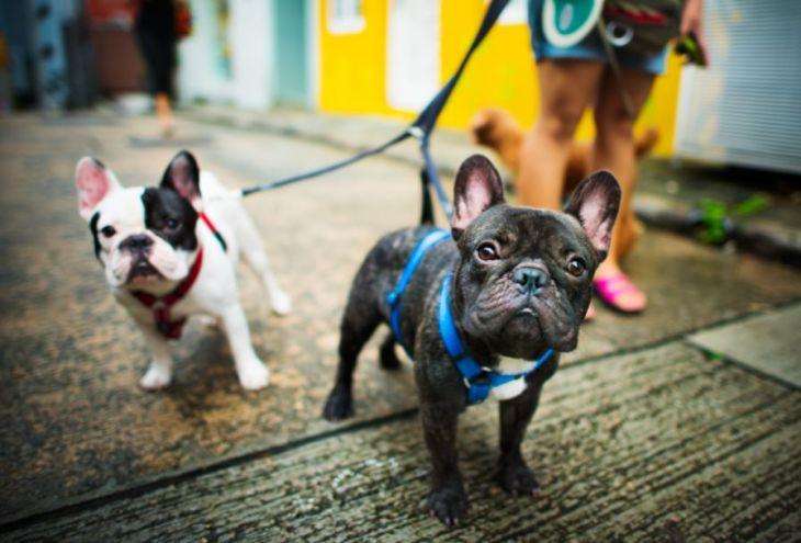 Партия защиты животных Кипра: собак можно выгуливать несколько раз в день!