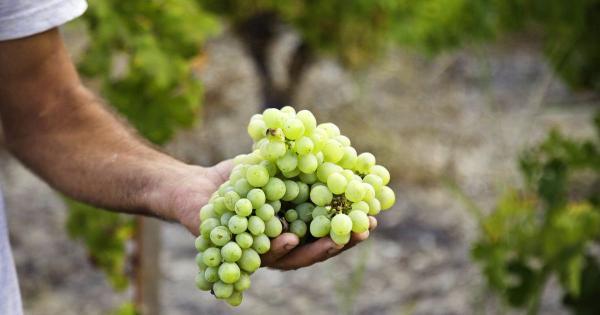 Пейте итальянское! В кипрском вине нашли пестициды