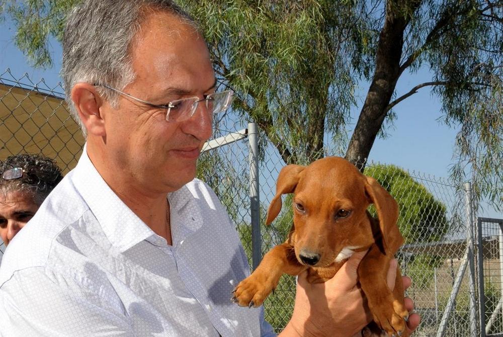 Костас Кадис: животные нуждаются в нашей любви - Вестник Кипра