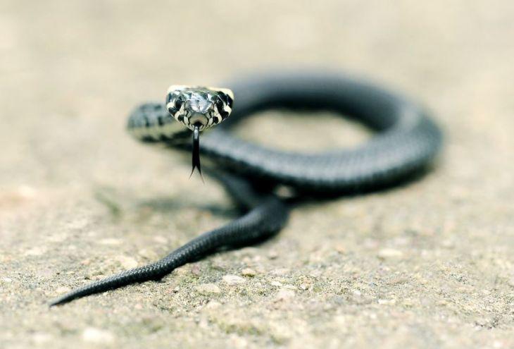 В Пафосе школьника укусила змея