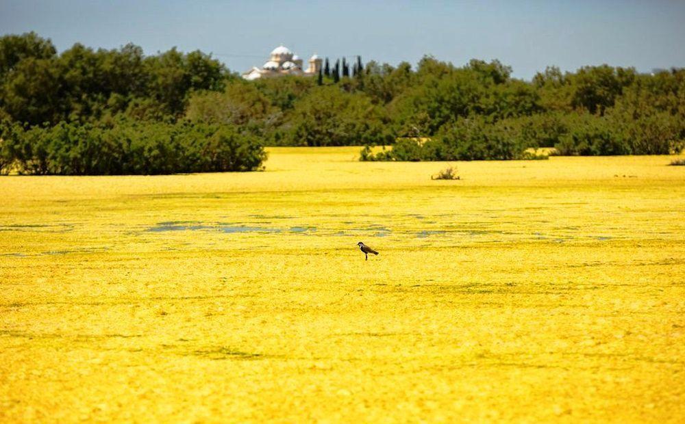 «Желтое озеро» в Ороклини - Вестник Кипра
