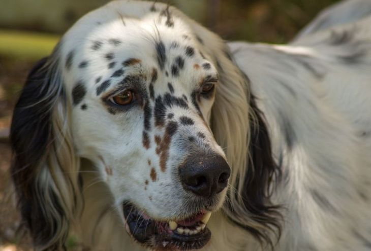 Кипрские охотники больше не смогут безнаказанно бросать своих собак на произвол судьбы