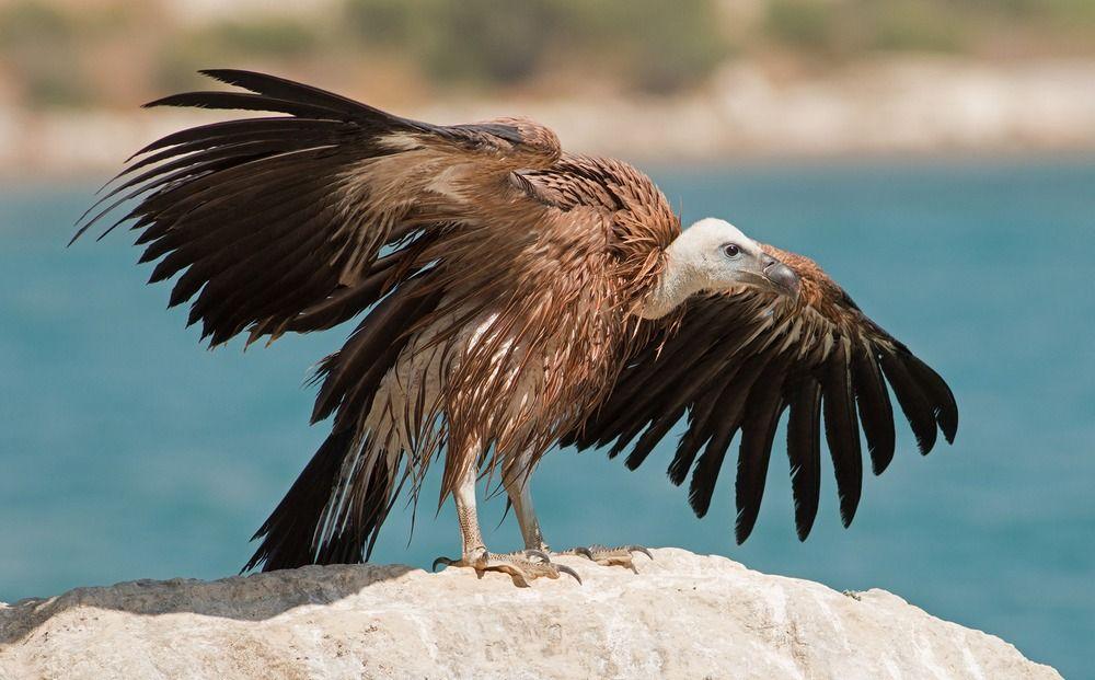 Экологи спасли редкую птицу - Вестник Кипра
