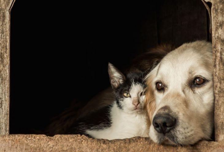 Партия защиты животных Кипра: надо найти новаторские способы заботы о бездомных котах и собаках!